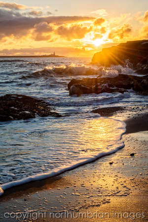 Coquet Island golden morning